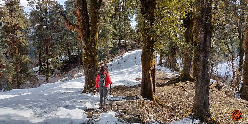 Beautiful Forest with Snow in Dayara Bugyal Trek