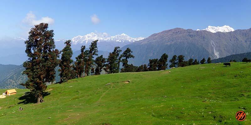 Beautiful Green Meadows in Deoriatal Chandrashila Trek