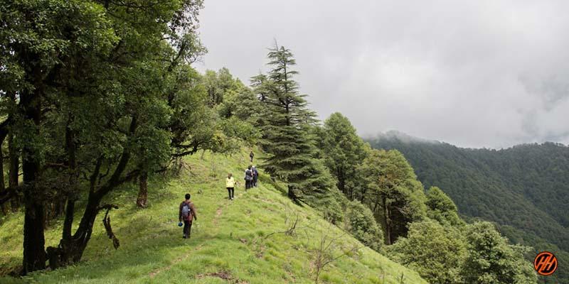 Beautiful green forest view in Devalsari Lumsu Top